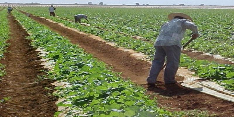 Resultado de imagem para vale do açu agricultura