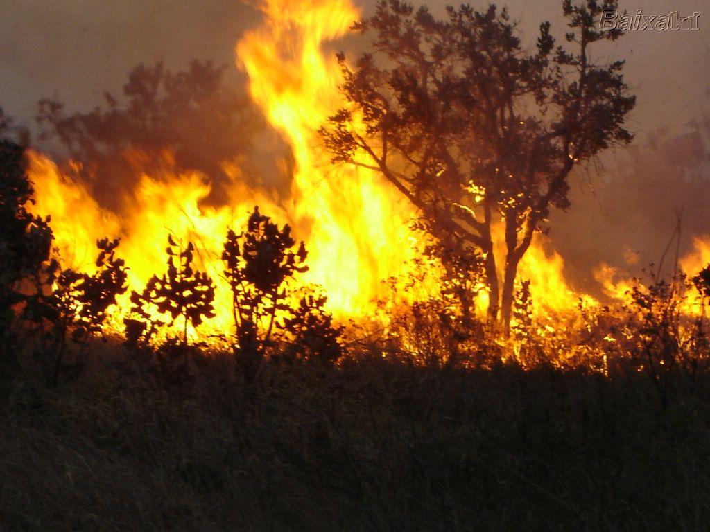 Governo suspende a prática de queimadas em todo o país por 60 dias