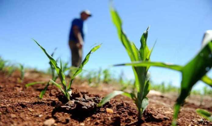 Norte e Nordeste têm R$ 20 milhões disponíveis no seguro rural até outubro