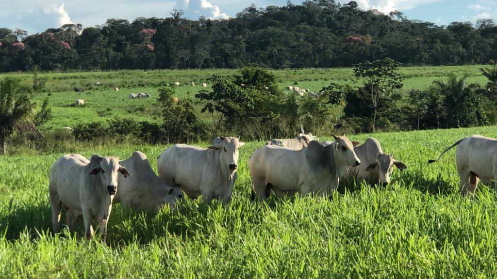 Proprietários rurais têm até amanhã para entregar Declaração do ITR à Receita