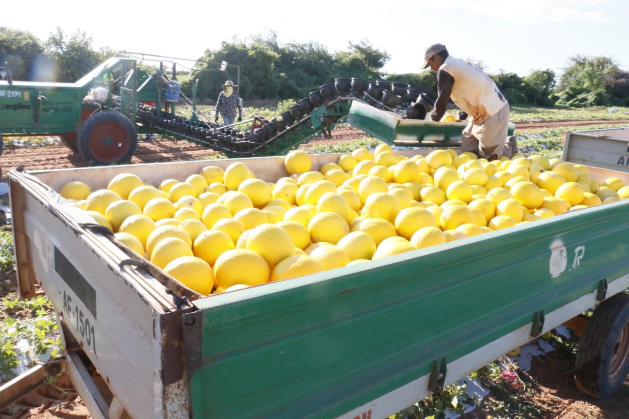 RN exportará melão para a China e acordo deve gerar 10 mil empregos em 3 anos