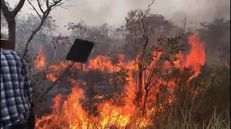 Polícia prende membros de ONGs sob suspeita de incendiar floresta no Pará