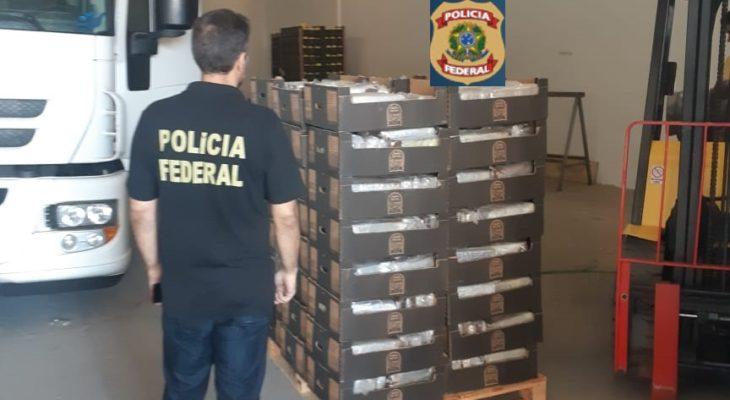 MPF denuncia grupo do RN que tentou exportar 1 tonelada de cocaína pelo porto