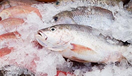 Além de frutas, RN lidera exportações de peixes frescos ou refrigerados no país